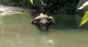 elefantessa morente