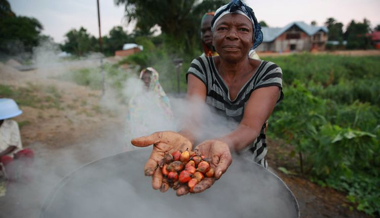 Sud-Kivu Est del la RD Congo:130 hectares spoliés par des particuliers et responsables de certaines entreprises en province.