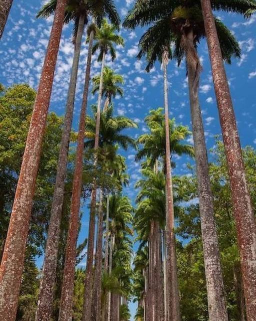 Você conhece o Jardim Botânico do Rio de Janeiro?