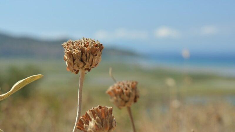 La primavera dell'Albania