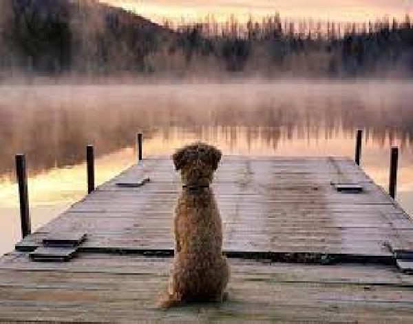 Un horizonte de perros
