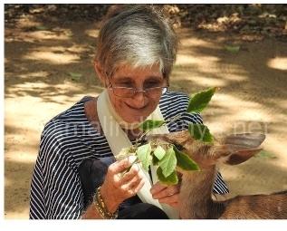MalindiKenya/ La salvaguardia dei colobi a Diani ha un'anima italiana